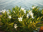 Swimming flowers