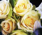 carolina Flowers 2 by lizzygurl17108