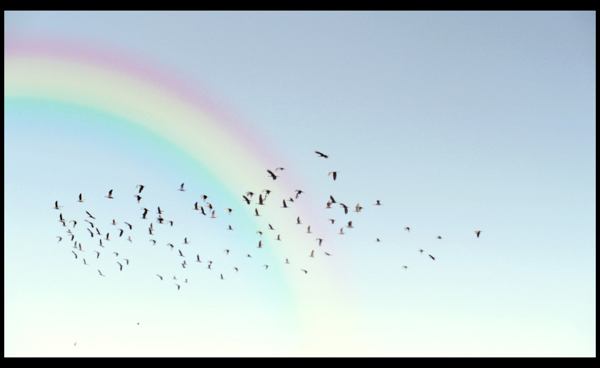 Birds Fly Over The Rainbow By Apartyintheusa On Deviantart