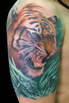 Tigre B Cover Up After