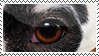 Dalmatian Stamp by Spaik-The-Wolf