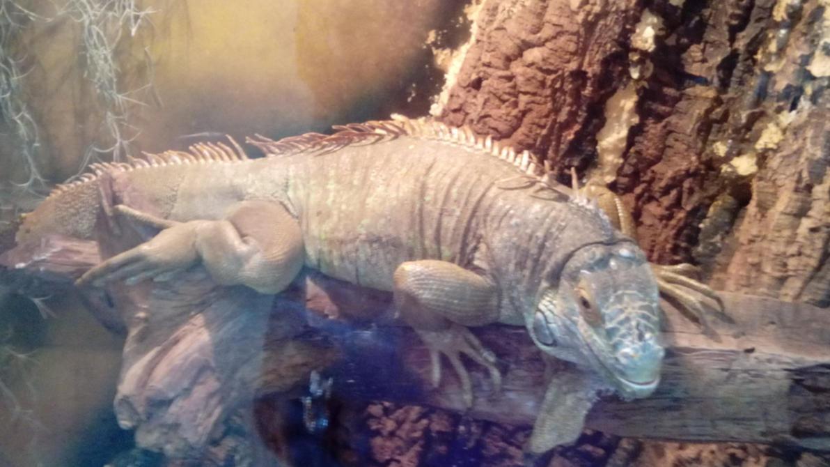 Iguana by Spaik-The-Wolf