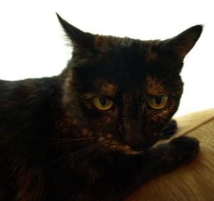 finalmonk's Profile Picture