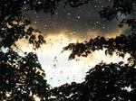 Tree Through Rainy Window 3