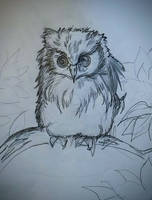 Owl Sketch by DarkStormSeeker