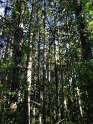 Sun dappled trees by Discworldgod
