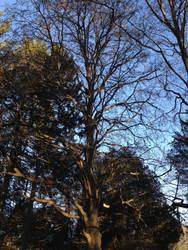Sleeping Tree 1 by Discworldgod