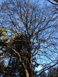 Sleeping Tree 2 by Discworldgod