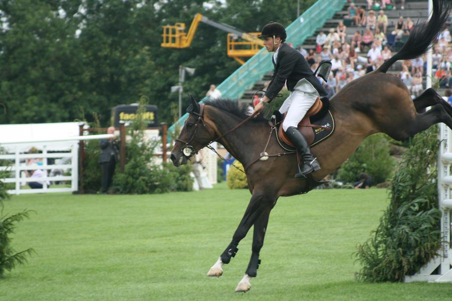 Peter Berkers Sporthorses  Jumping Horses for sale