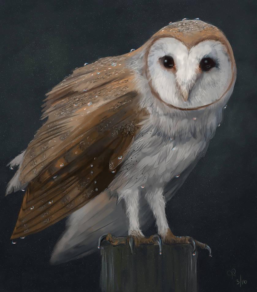 Rainy Owl