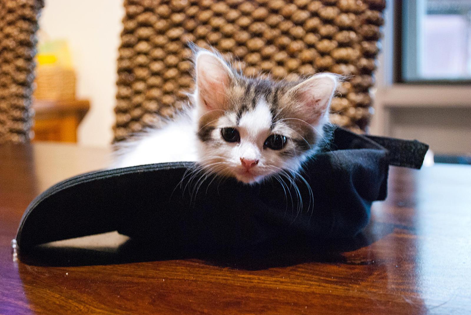Hat Length Cat  Digital Stagebox