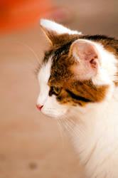 Leo Cat by halfhandau