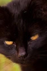 Georgie Cat by halfhandau