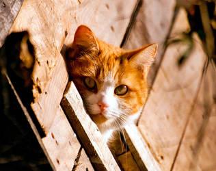 Tom Cat by halfhandau
