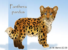 panthera pardus by Windshade888