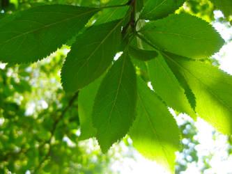 Big Green leafs by xenoxy