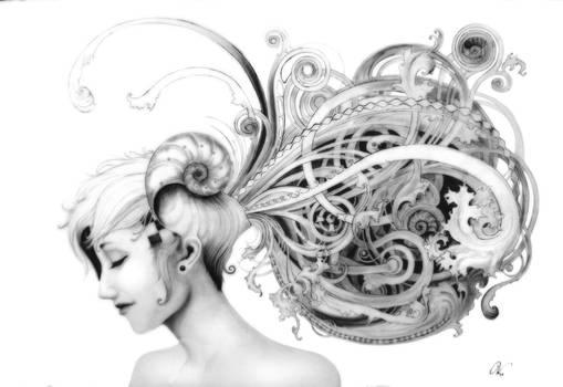 +Nautilus+