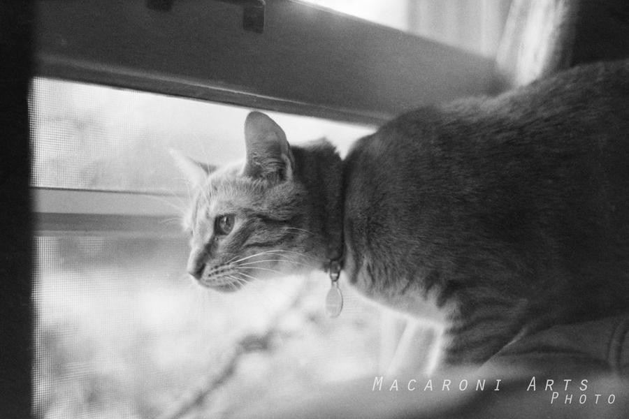 Penelope in the Window