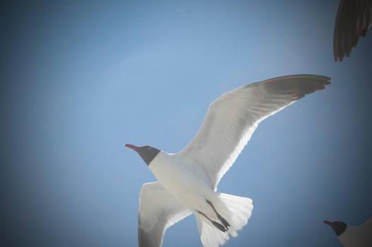 Freedom Flyers