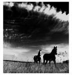 Prowler Horses