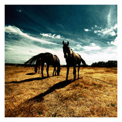 Horse Dynasty