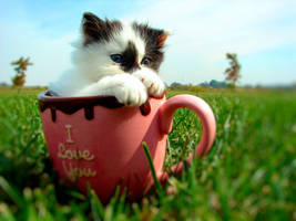 Kitten in a Cup by tracy-Me