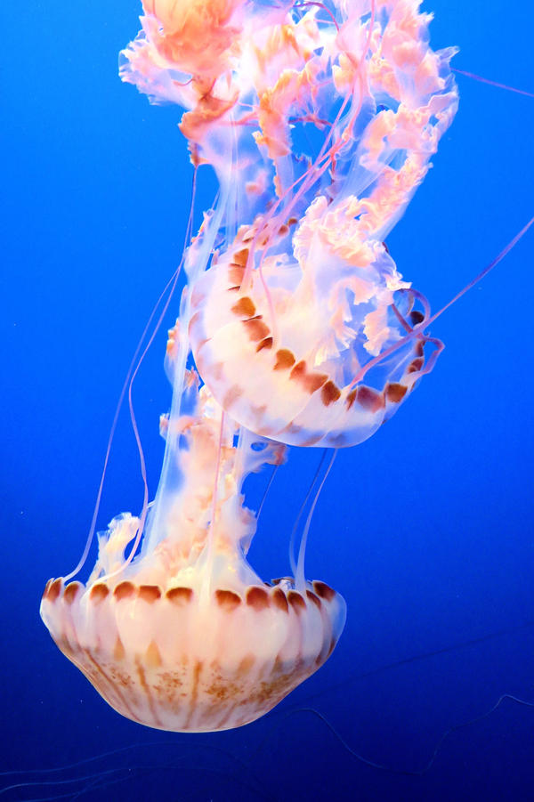 Two Jellies