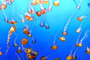 Lots of Jellies