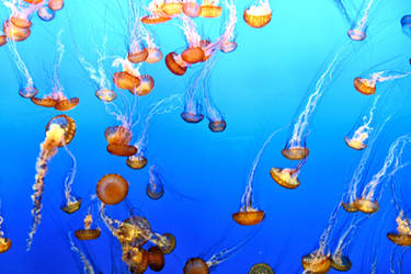 Lots of Jellies