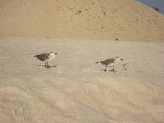 Seagulls family by aragornsparrow