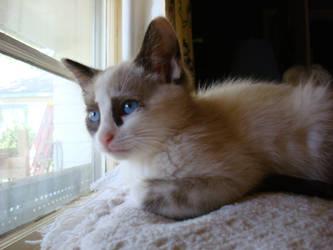 Blue Eyed Gracie by aragornsparrow