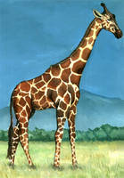 Reticulated Giraffe by grim1978