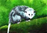 Opossum by grim1978