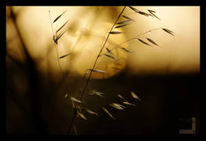 Hay in sunset I by ntora
