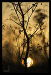Hay in Sunset III