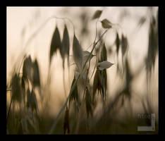 Dripping hay by ntora