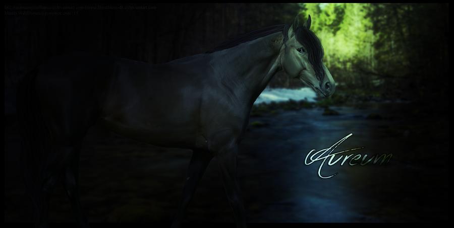 Aureum by HorsesRule8