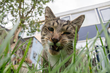 Cat eating grass by OceansCurse