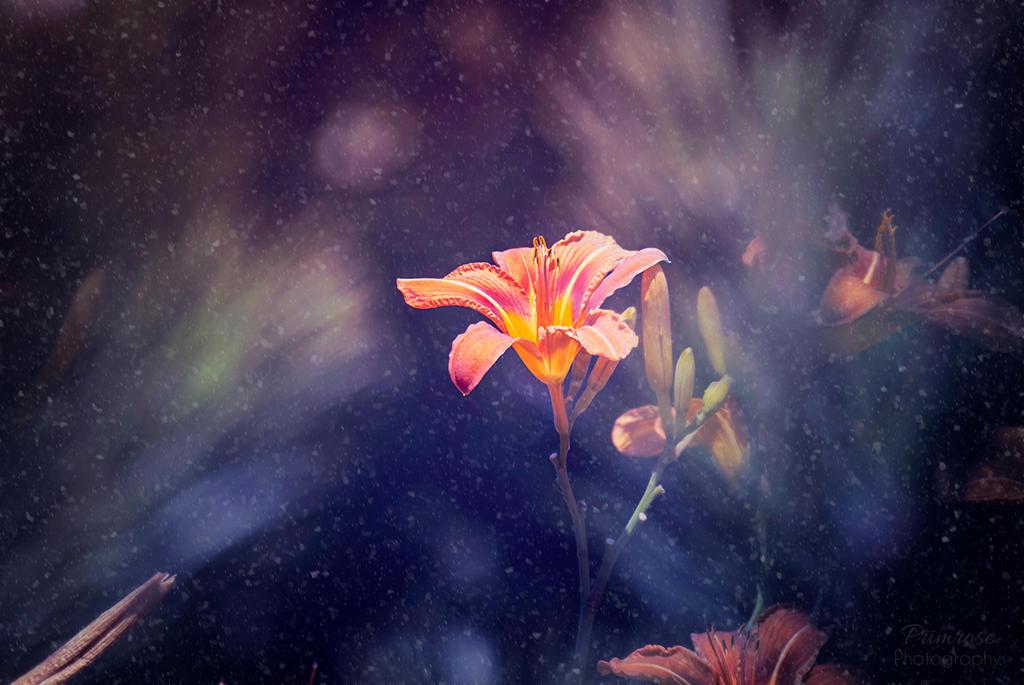 The Cold Vibrancy by Lenna-Primrose