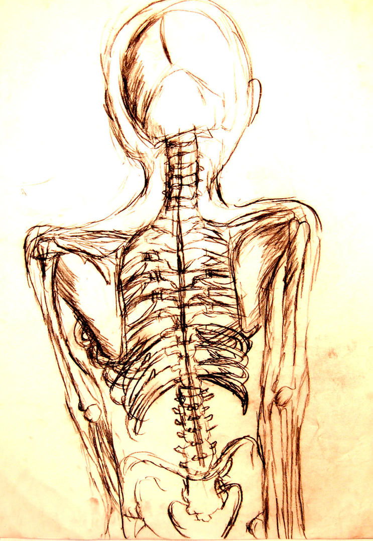 Back Bone Structure by ShadowZiggy on DeviantArt