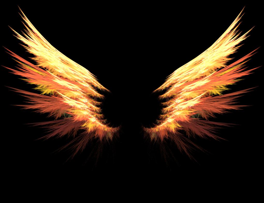 wings photos