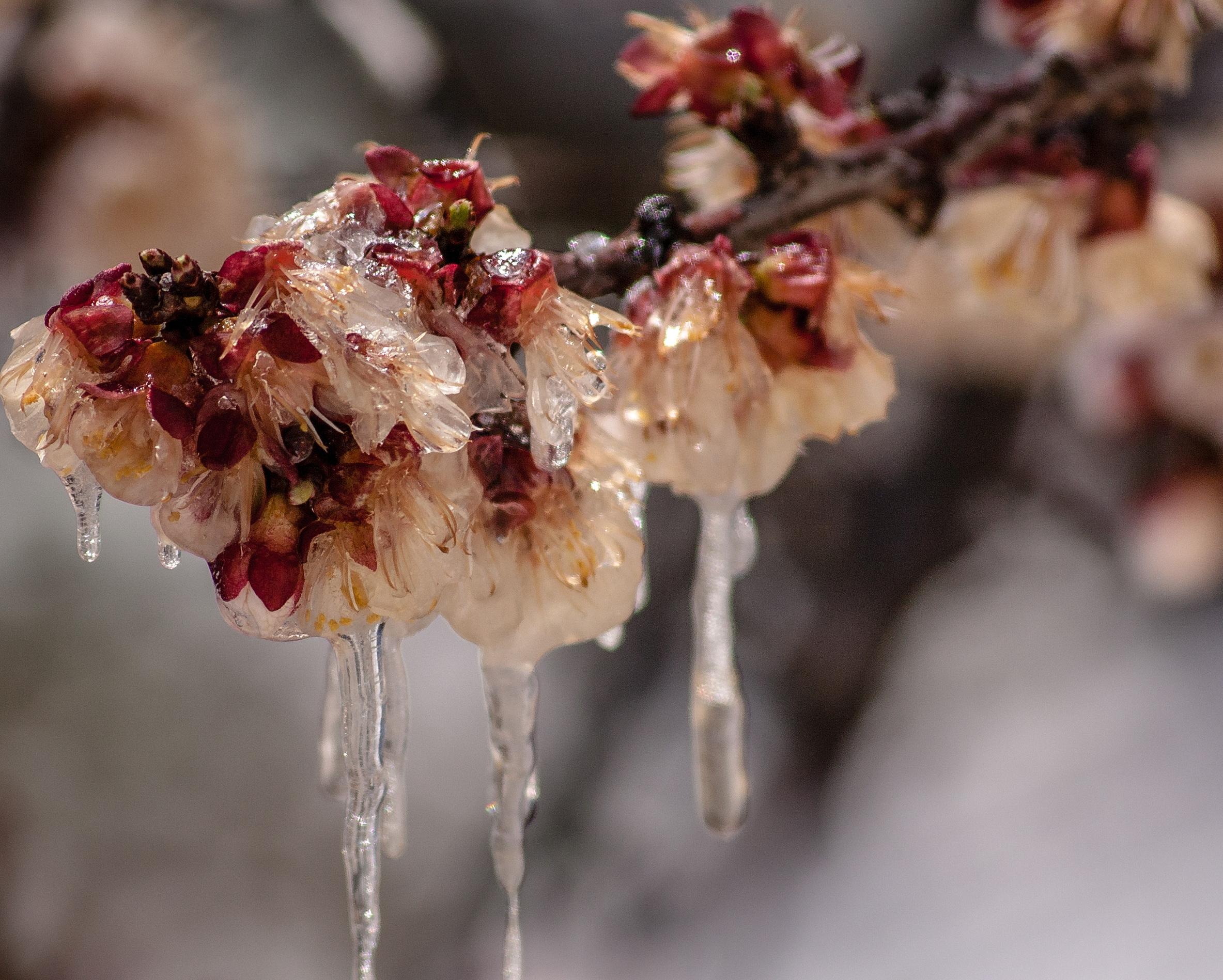 Frozen Flowers by covacistefan on DeviantArt