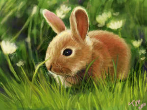 Bunny Speed Paint