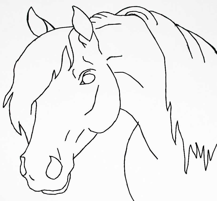 Line Drawing Head : Horse head lineart by bluemoon on deviantart