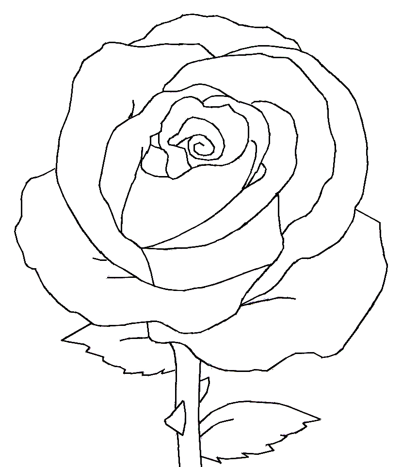 Red Flower Line Drawing : White and black rose lineart by bluemoon on deviantart