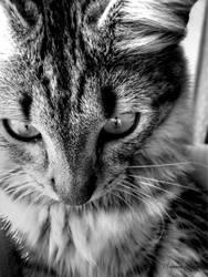 Sasha black and white by Azette
