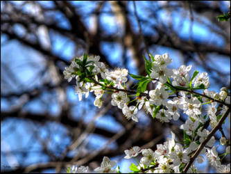 Spring time by Azette
