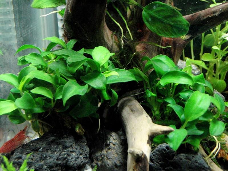 Superwen 39 s nano 12litre aquascaping world forum for Petit aquarium
