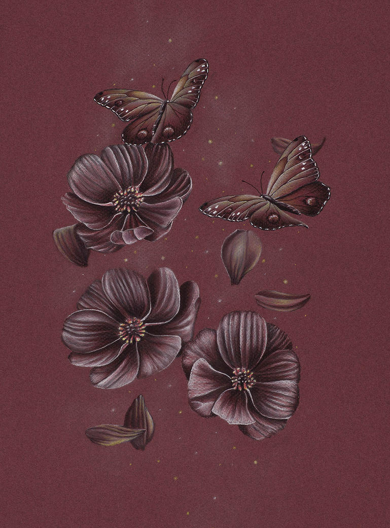 Butterflies-chocolate-cosmos-flower-drawing-fullwi by ...