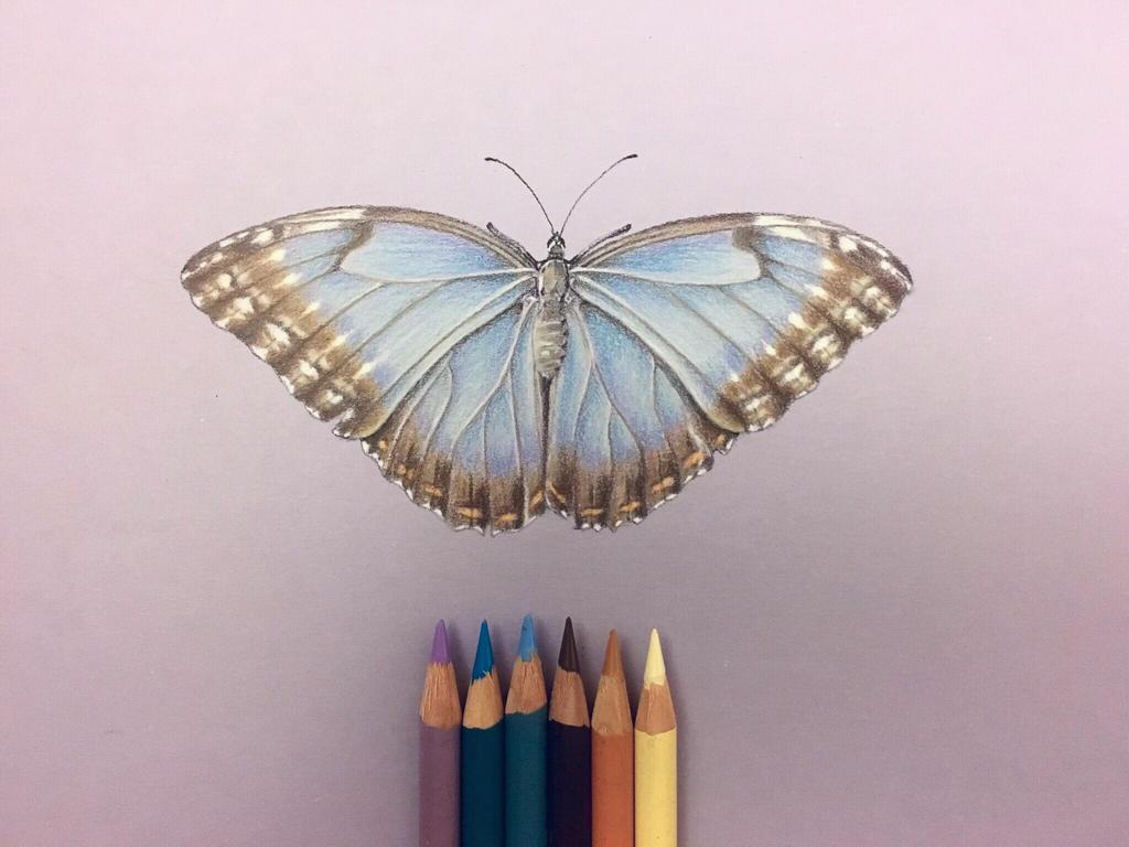 Realistic Blue Brown Butterfly Pencil Drawing Art by butterflyworldart